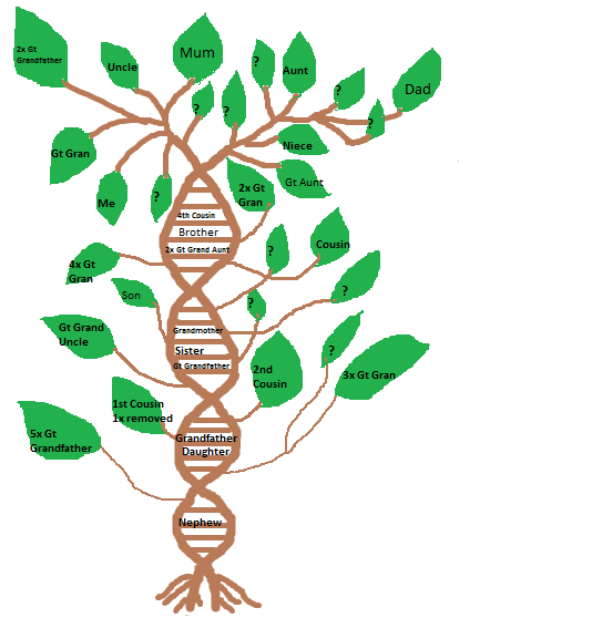 family tree dna mtdna review