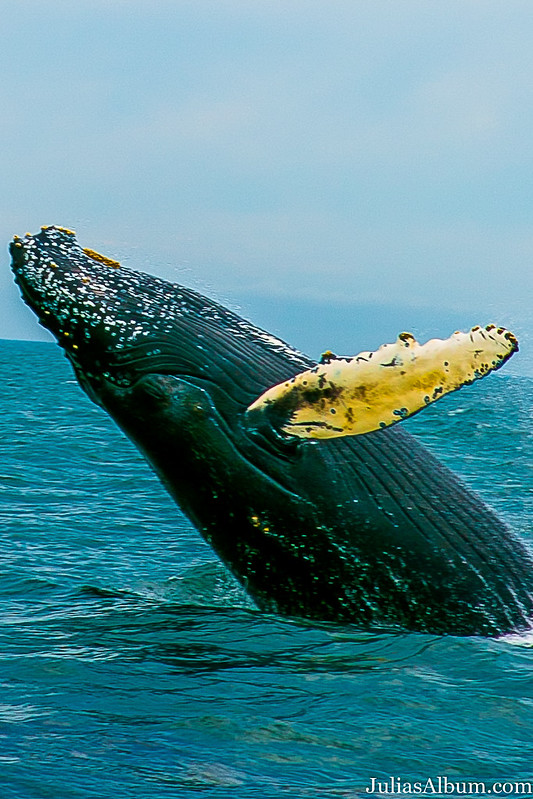 best whale watching nova scotia reviews