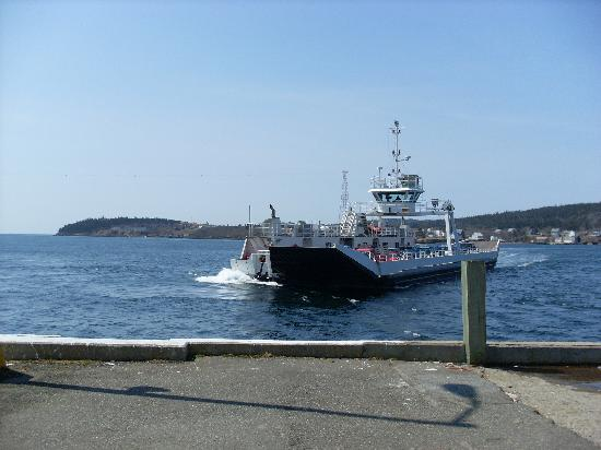 brier island whale watching reviews